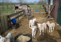 De-Dennenkamp-biologische-boerderij