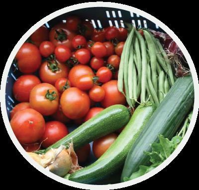 groentepakket-BioBoeren Achterhoek