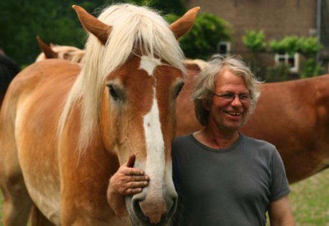 De-Wolfskuil-paarden