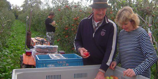 'tGelders-Eiland-fruitteeltbedrijf-01